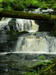 Port Ludlow Waterfall